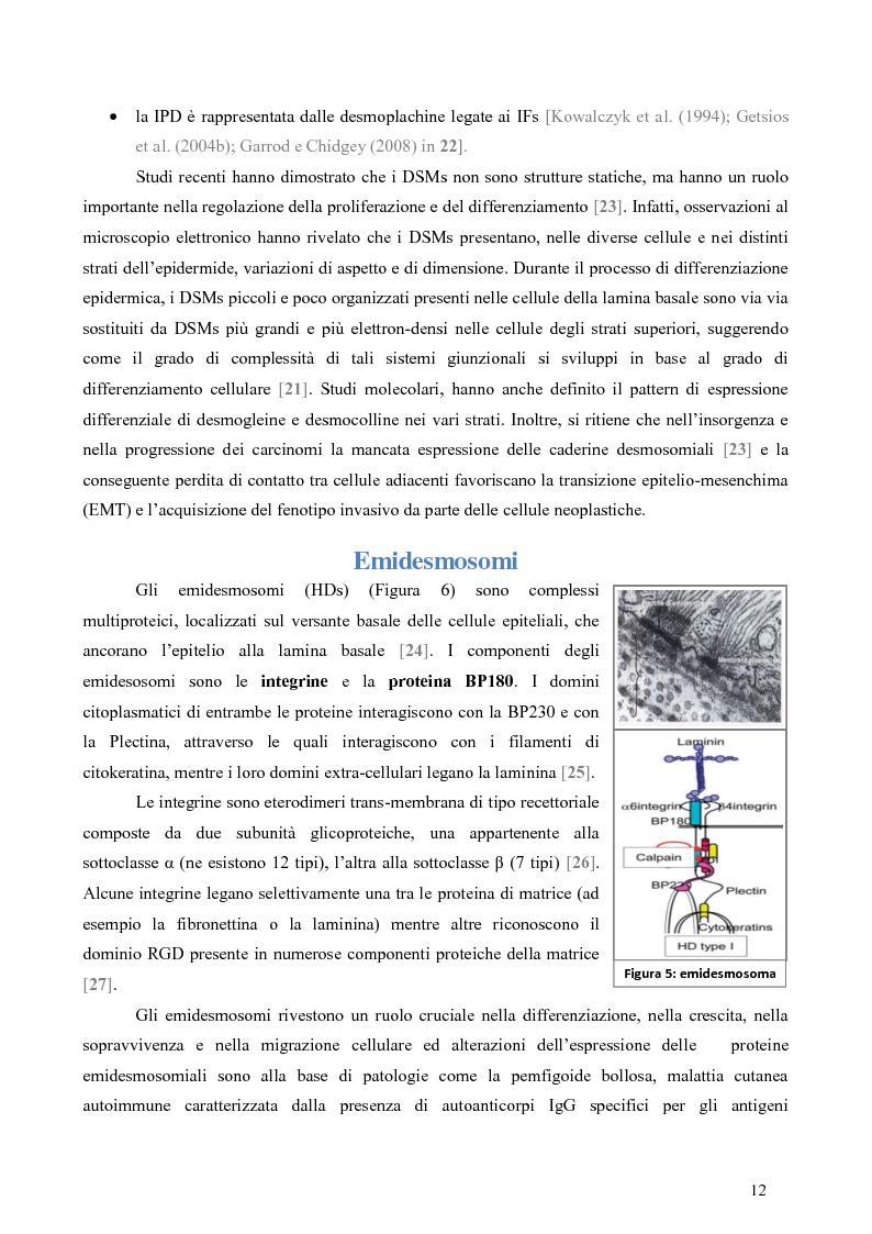 Anteprima della tesi: Studio dell'Interattoma della Proteina PAR-6 in Cellule di Carcinoma Mammario della linea 8701-BC, Pagina 8