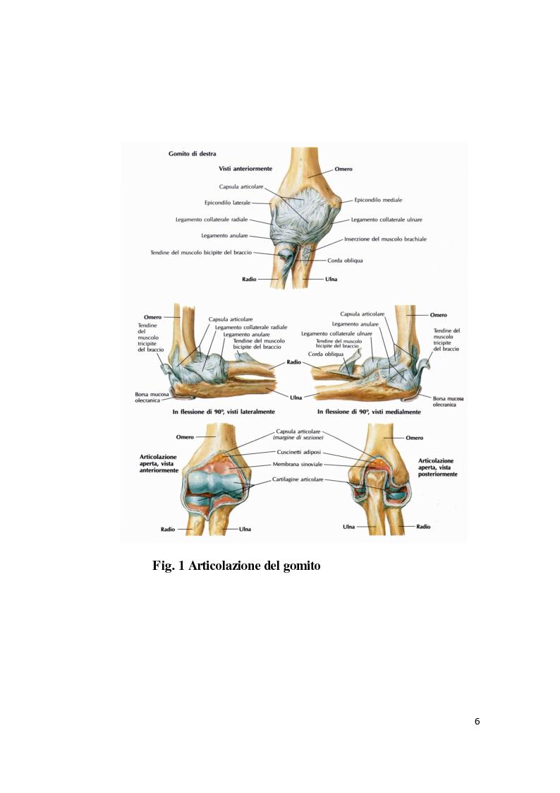 Anteprima della tesi: Il trattamento riabilitativo dell'epicondilite, Pagina 7