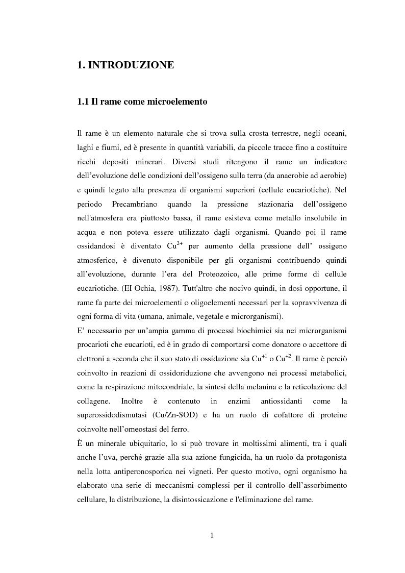 Effetto di rame e pH sulla crescita di lieviti Saccharomyces isolati da mosto e vinaccia in fermentazione - Tesi di Laur...