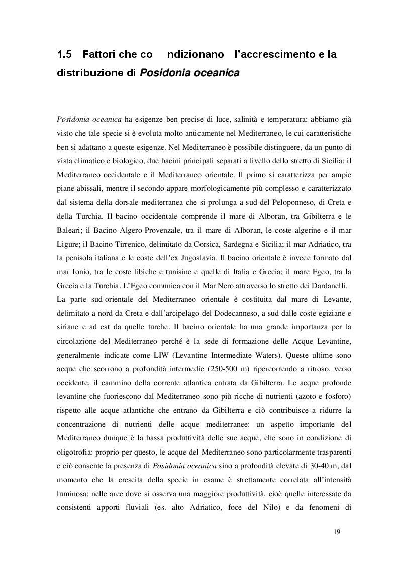 Estratto dalla tesi: Fioriture di Posidonia oceanica (L.) Delile nel bacino del Mediterraneo