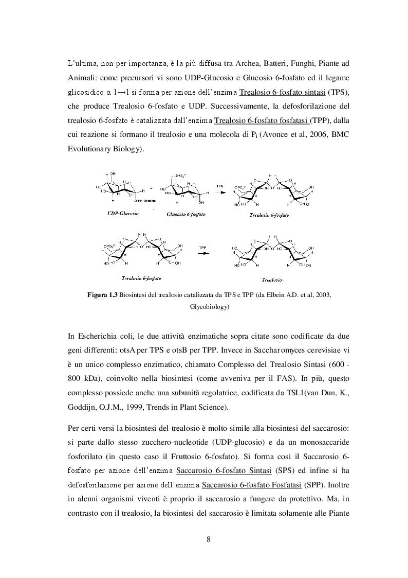 Estratto dalla tesi: Il trealosio: proprietà funzionali ed applicazioni in campo alimentare