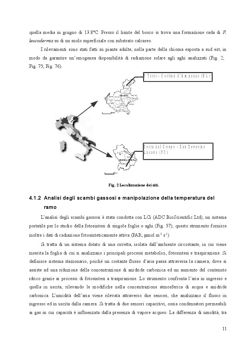 Estratto dalla tesi: Una spiegazione funzionale della posizione del limite superiore del bosco nelle Alpi italiane orientali: alcune evidenze ecofisiologiche