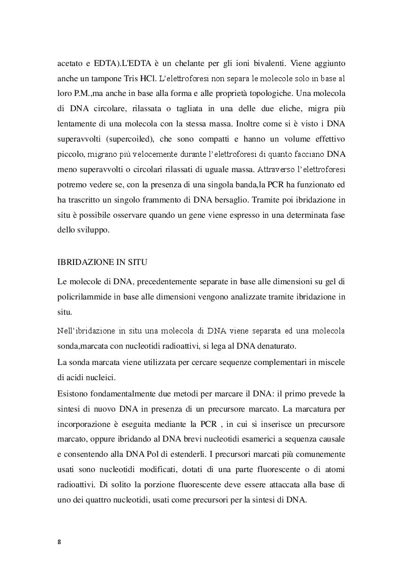 Estratto dalla tesi: Zebrafish (Danio Rerio) come sistema modello dello studio dei vertebrati