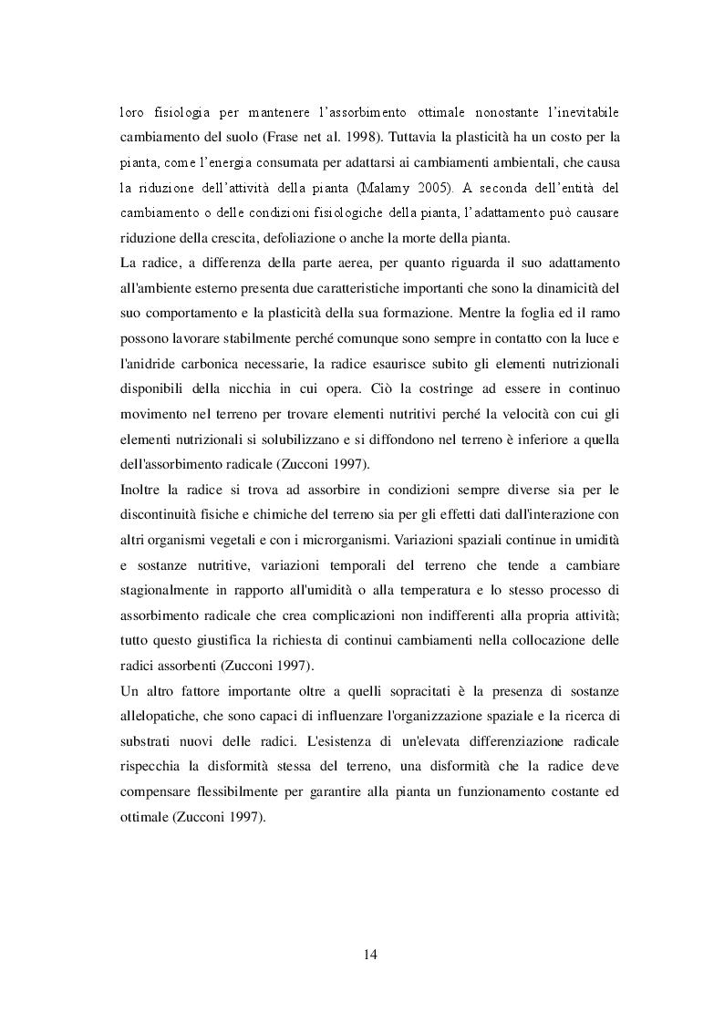Estratto dalla tesi: Crescita delle radici di olivo in presenza di residui colturali