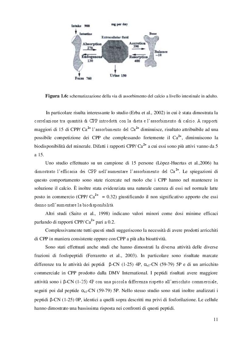 Estratto dalla tesi: Produzione di peptidi biologicamente attivi e loro interazione con nanosistemi