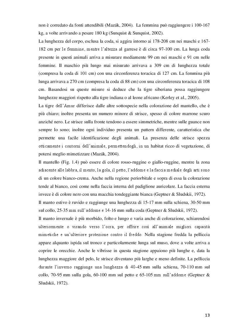 Estratto dalla tesi: Analisi e confronto di parametri etologici ed endocrini in esemplari di tigre siberiana (Panthera tigris altaica) mantenuti in ambiente controllato, in diverse condizioni gestionali