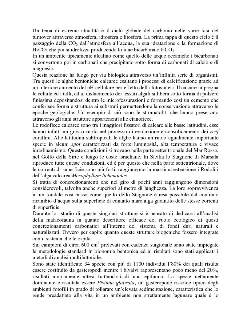 Anteprima della tesi: Descrizione e struttura della malacofauna associata alle alghe calcaree dello Stagnone di Marsala (Trapani), Pagina 1