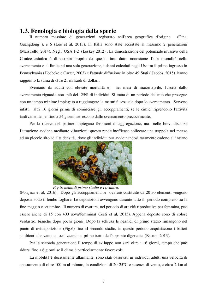 Estratto dalla tesi: Misure di Contenimento degli organismi invasivi. Il caso della Cimice Marmorizzata Asiatica
