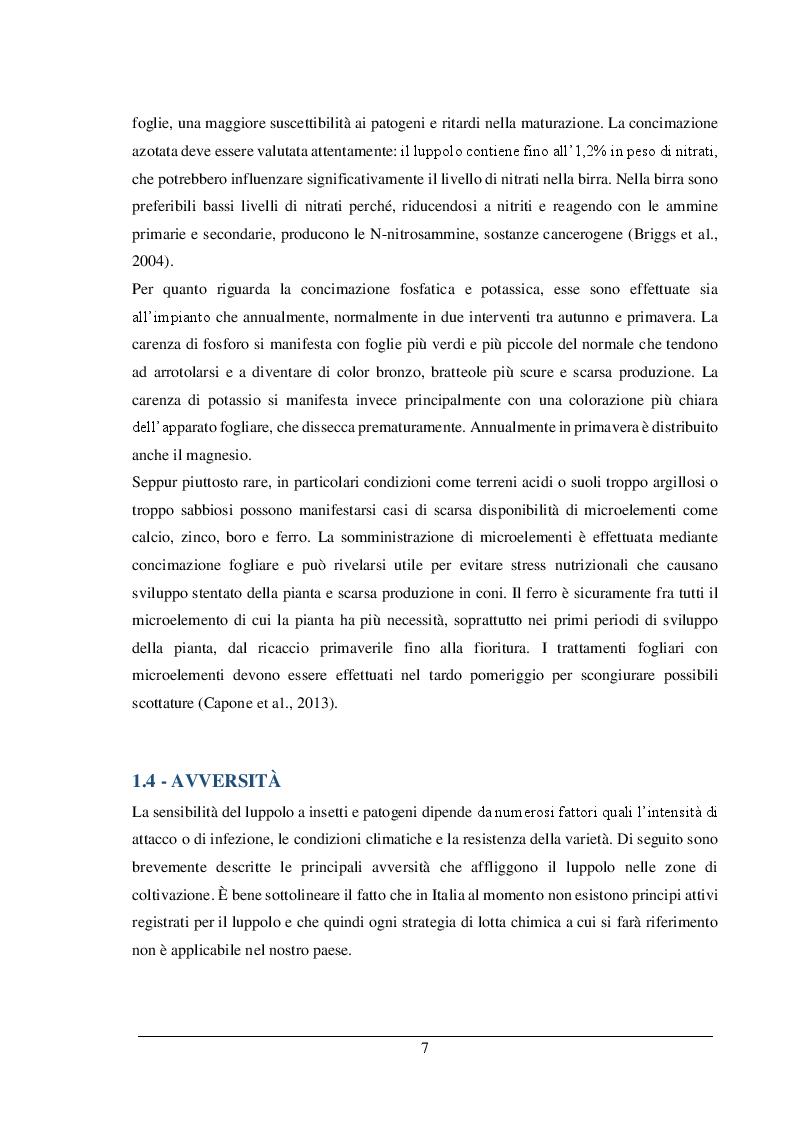 Estratto dalla tesi: Gestione colturale e caratteristiche quanti-qualitative del luppolo in Piemonte: prove preliminari