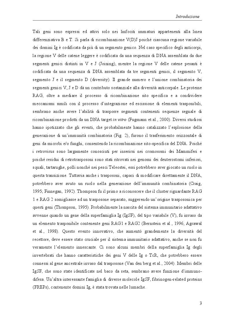 Estratto dalla tesi: Risposte immunitarie nei vertebrati ectotermi: attività cellulari e molecolari di leucociti del Teleosteo Dicentrarchus labrax