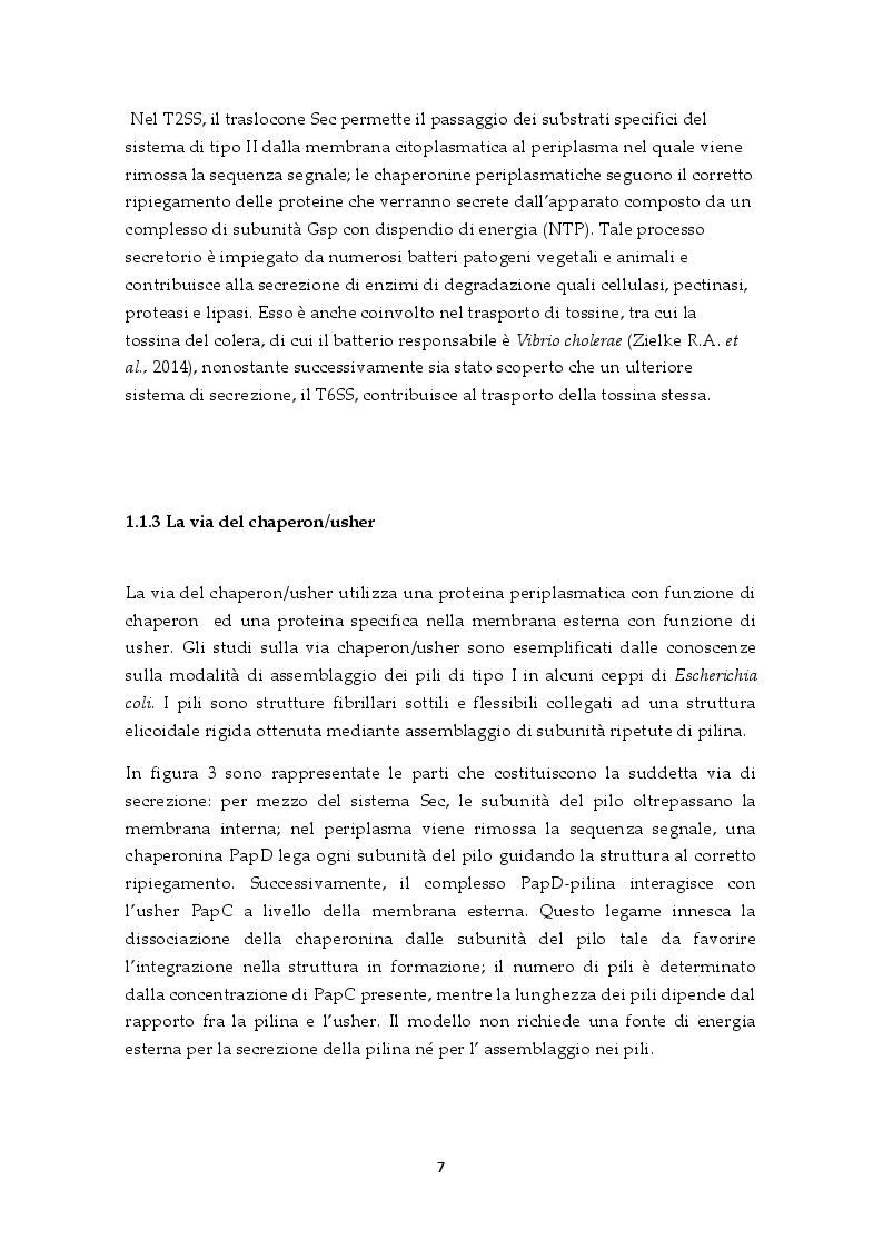 Estratto dalla tesi: Il sistema di secrezione di tipo VI: un esempio di strategia evolutiva nel contesto della competizione tra popolazioni batteriche
