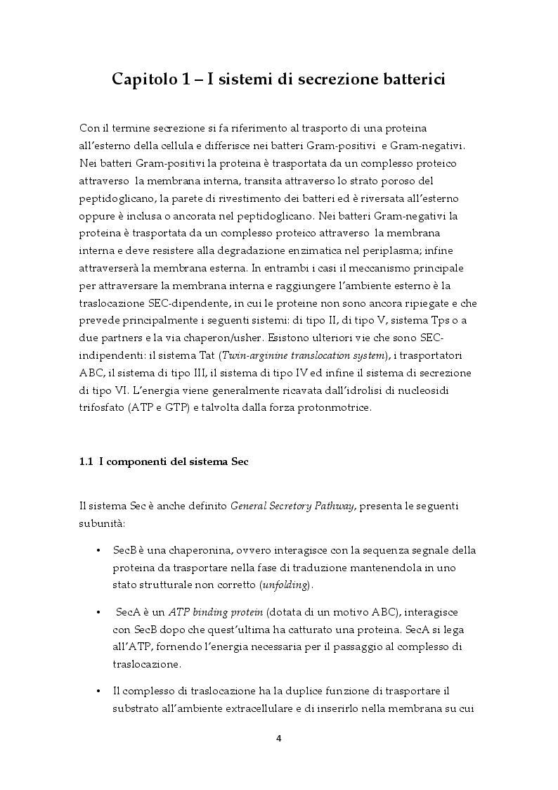 Anteprima della tesi: Il sistema di secrezione di tipo VI: un esempio di strategia evolutiva nel contesto della competizione tra popolazioni batteriche, Pagina 2