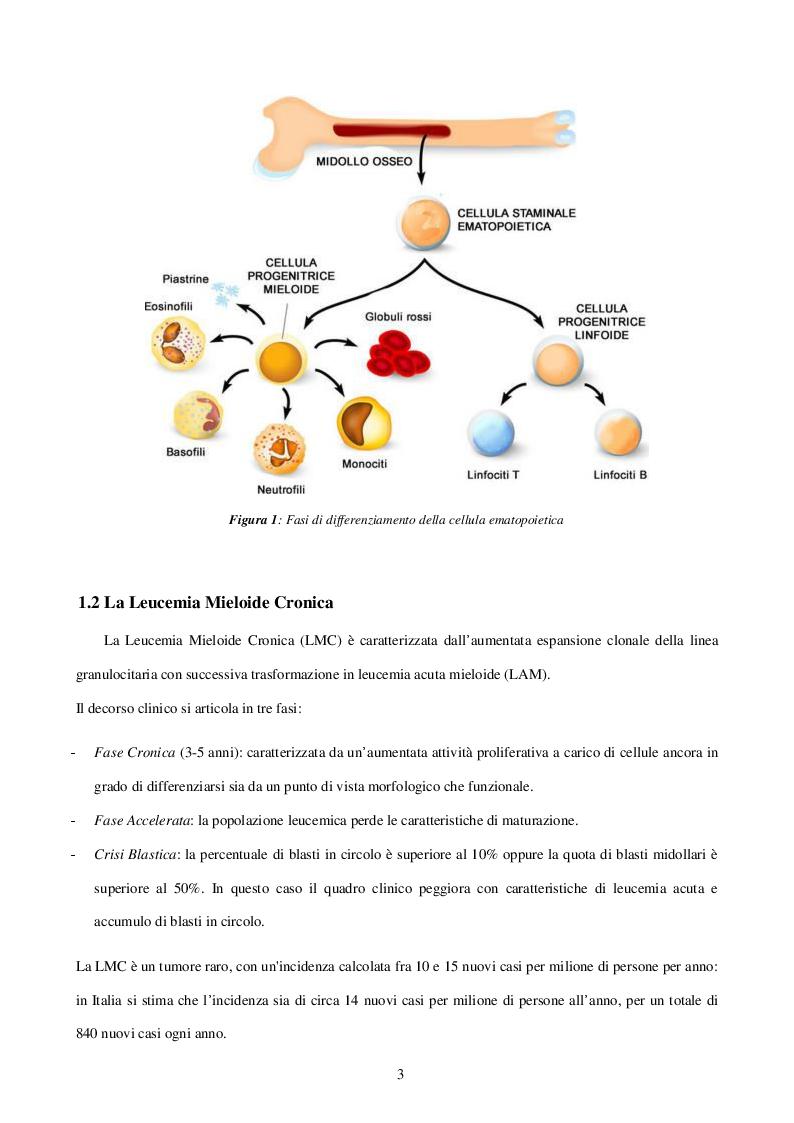 Anteprima della tesi: Caratterizzazione e ruolo delle alterazioni citogenetiche che insorgono nel clone Philadelphia negativo durante il trattamento con inibitori delle tirosinchinasi nella Leucemia Mieloide Cronica, Pagina 3