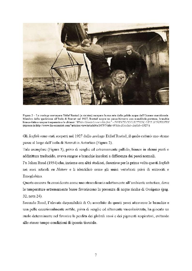 Anteprima della tesi: Icefish, i pesci che persero i globuli rossi, Pagina 3