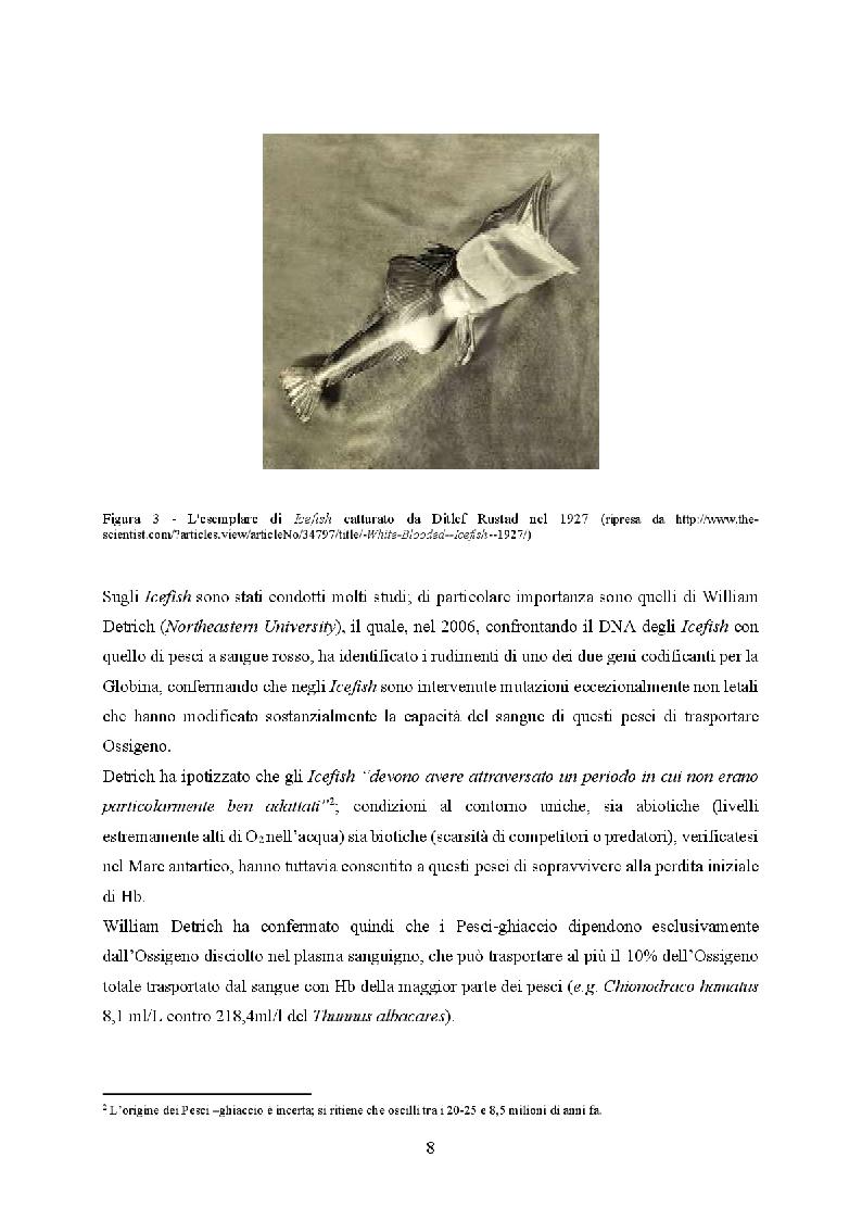 Anteprima della tesi: Icefish, i pesci che persero i globuli rossi, Pagina 4