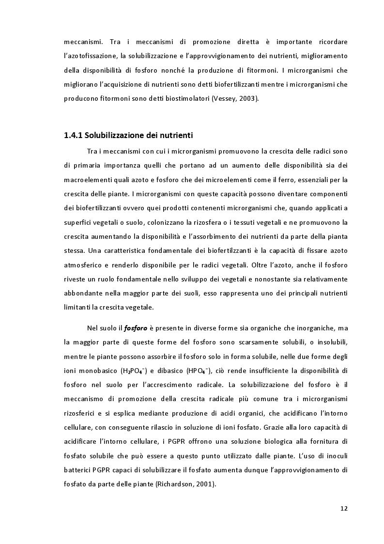 Estratto dalla tesi: Studio della Biodiversità nelle Comunità Microbiche nei Vigneti del Montepulciano d'Abruzzo