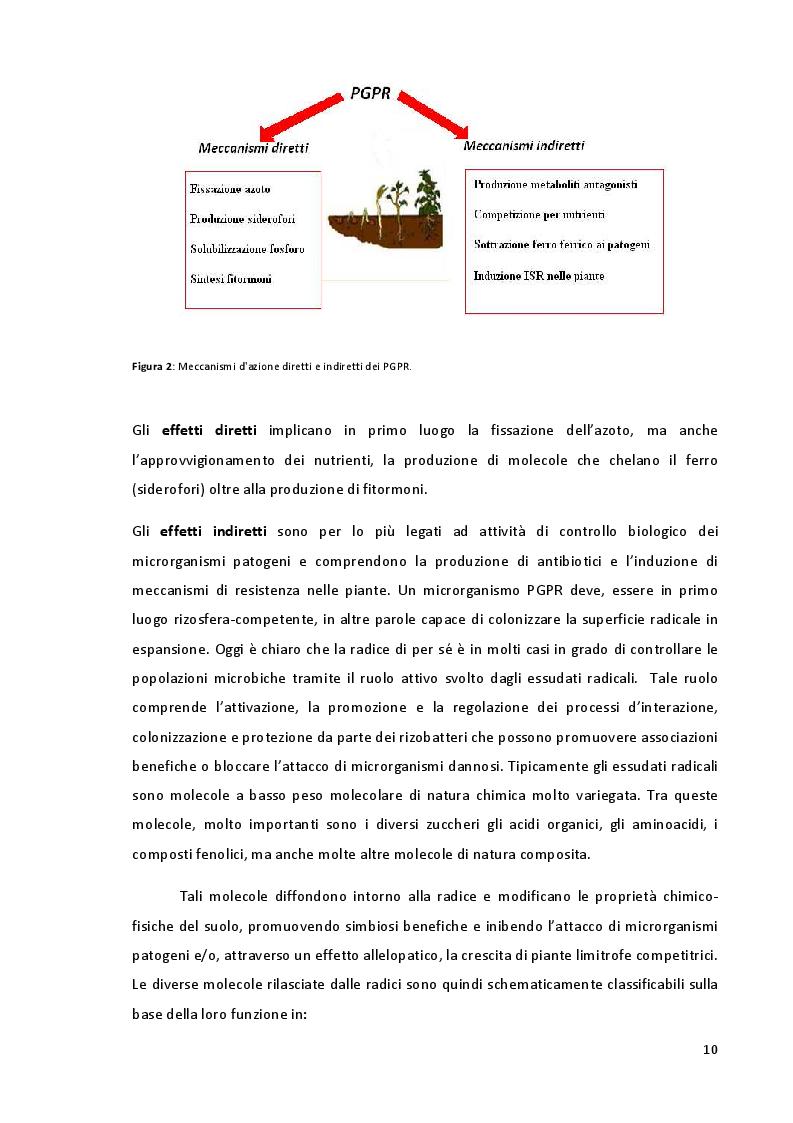 Anteprima della tesi: Studio della Biodiversità nelle Comunità Microbiche nei Vigneti del Montepulciano d'Abruzzo, Pagina 7