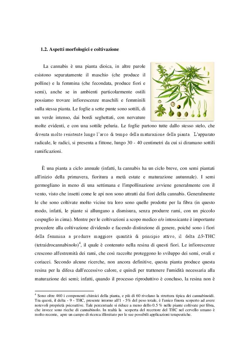 Anteprima della tesi: Cannabis. Aspetti di una devianza., Pagina 6