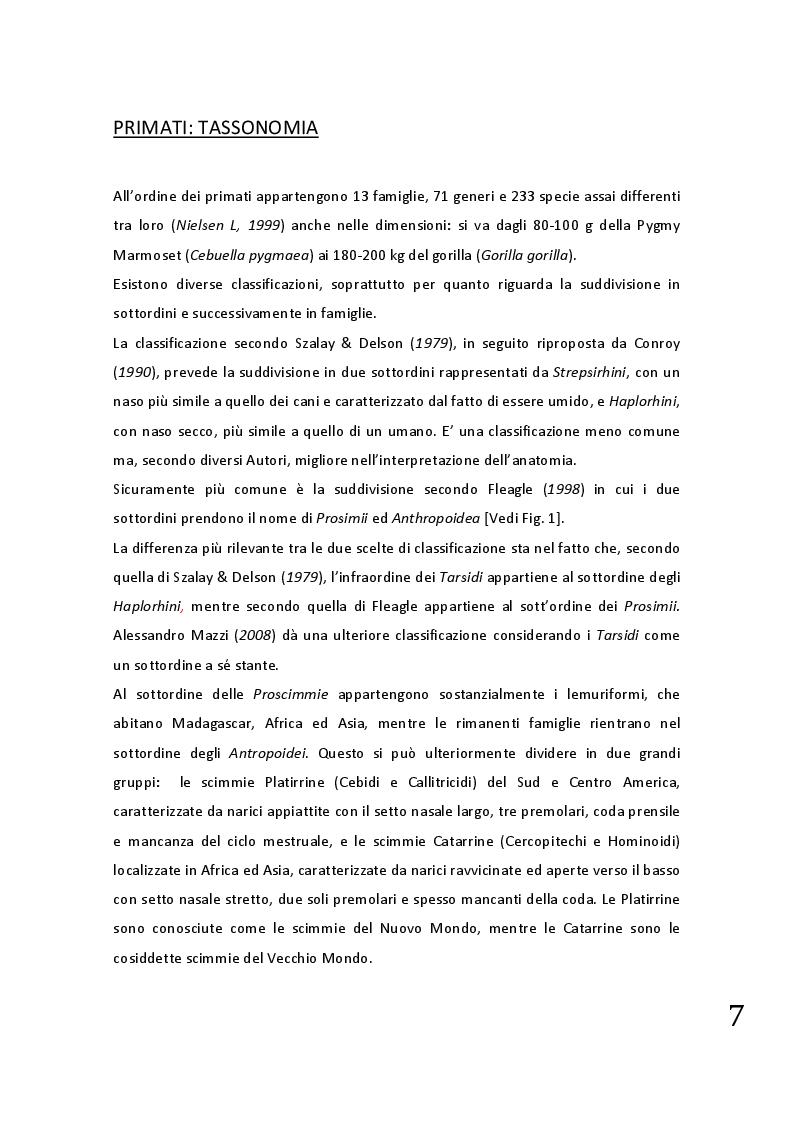 Anteprima della tesi: Protocolli applicabili nella pratica anestesiologica sui primati, Pagina 5