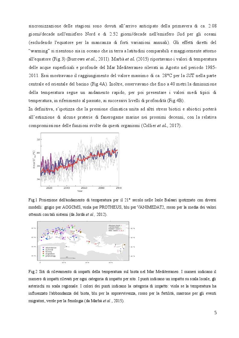 Anteprima della tesi: Studio sulle risposte allo stress termico in differenti popolazioni mediterranee ed atlantiche di Cymodocea nodosa (Ucria) Ascherson, Pagina 4
