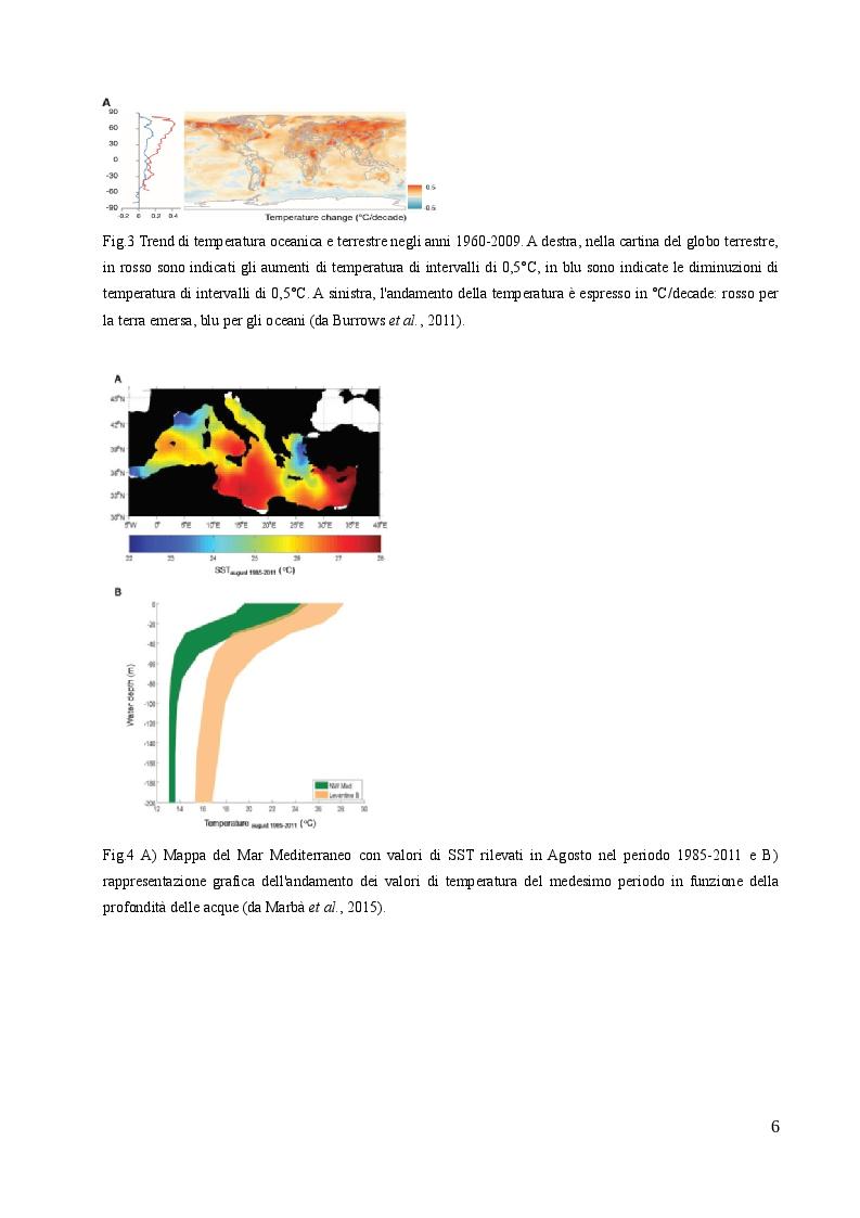 Anteprima della tesi: Studio sulle risposte allo stress termico in differenti popolazioni mediterranee ed atlantiche di Cymodocea nodosa (Ucria) Ascherson, Pagina 5