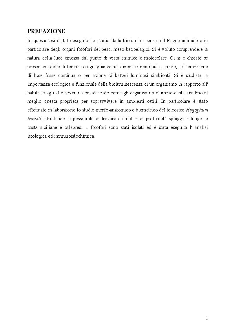 Anteprima della tesi: I fotofori di Hygophum benoiti (Cocco) 1838, Pagina 3