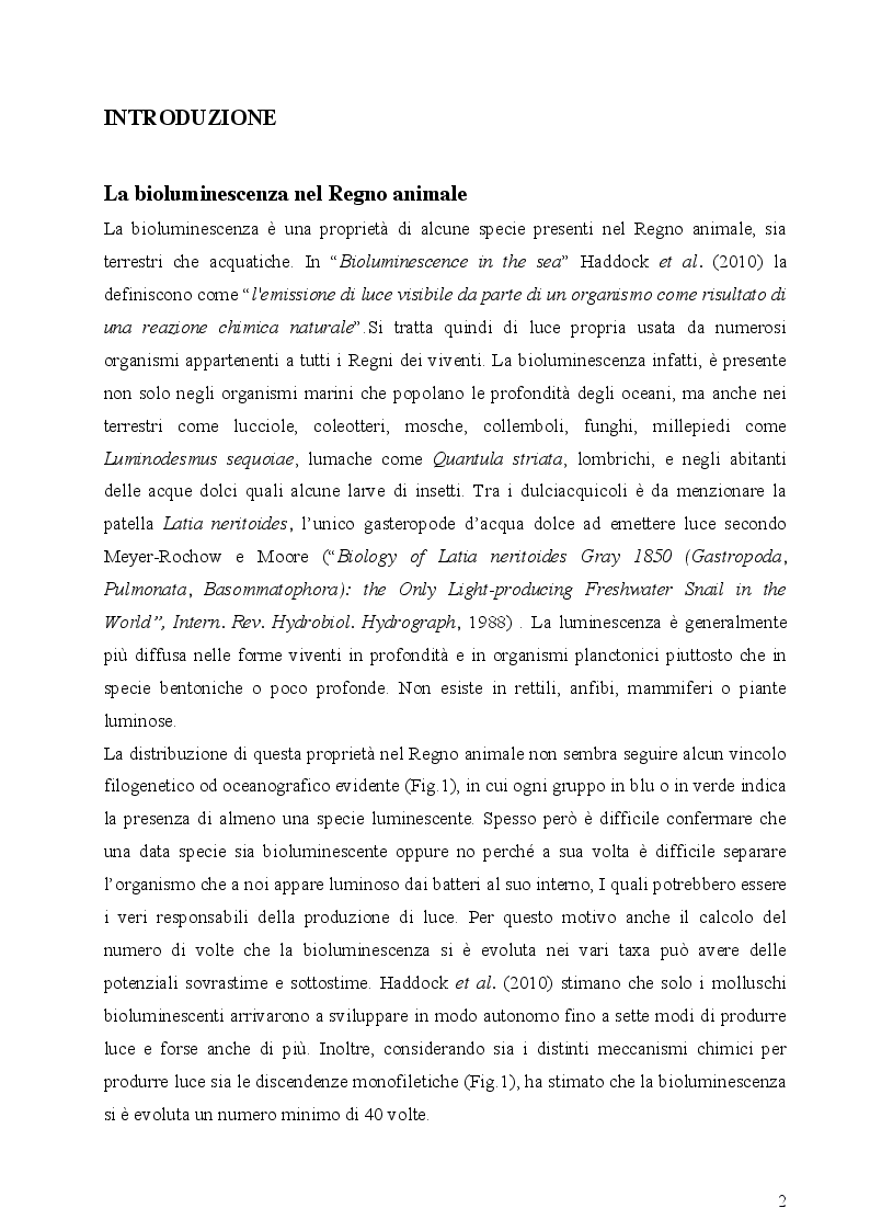 Anteprima della tesi: I fotofori di Hygophum benoiti (Cocco) 1838, Pagina 4