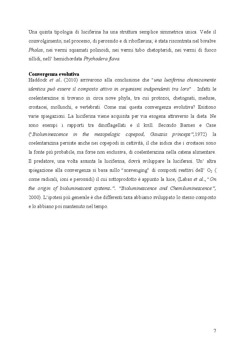 Anteprima della tesi: I fotofori di Hygophum benoiti (Cocco) 1838, Pagina 9