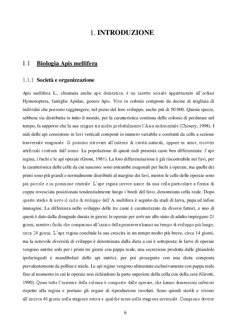 Anteprima della tesi: Effetto combinato dei pesticidi neonicotinoidi e della qualità dell'alimentazione sul metabolismo dei carboidrati in Apis mellifera, Pagina 3