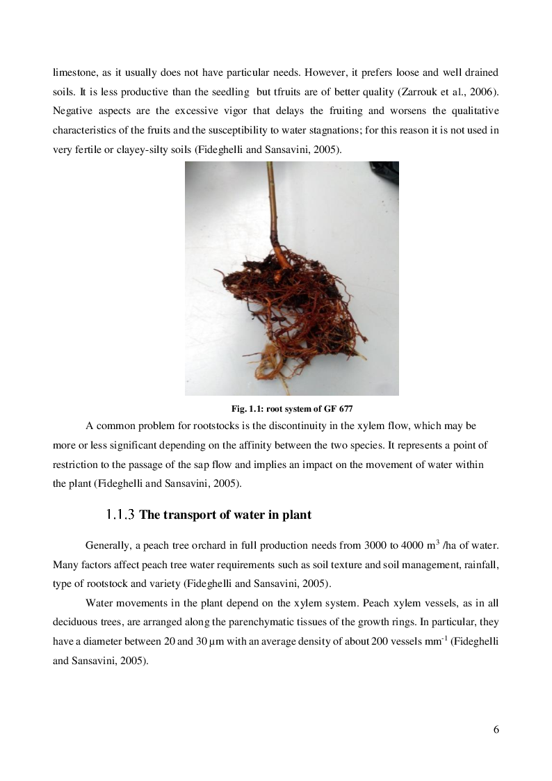 Anteprima della tesi: Wastewater as an alternative source for irrigating horticultural crops: investigating Escherichia coli root internalization on GF 677 (Prunus persica x Prunus amigdalus)., Pagina 4