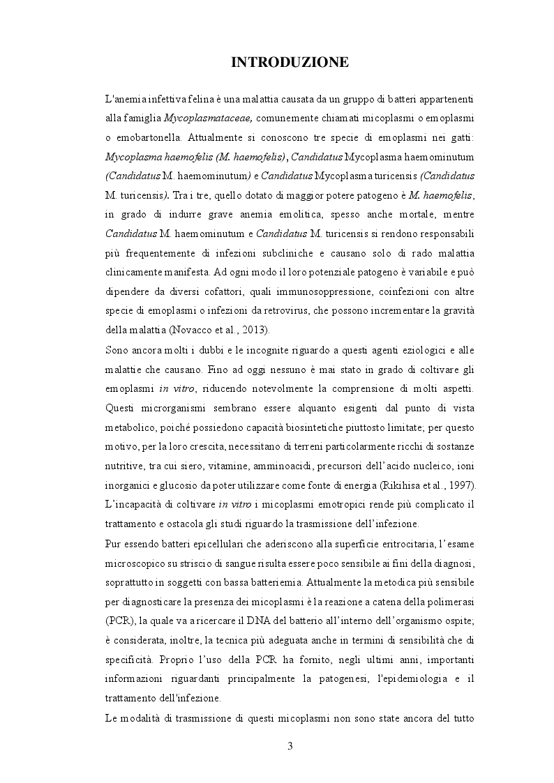 Anteprima della tesi: Anemia infettiva felina: quale ruolo per Candidatus Mycoplasma turicensis?, Pagina 2
