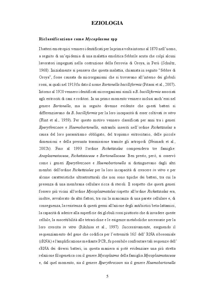Anteprima della tesi: Anemia infettiva felina: quale ruolo per Candidatus Mycoplasma turicensis?, Pagina 4