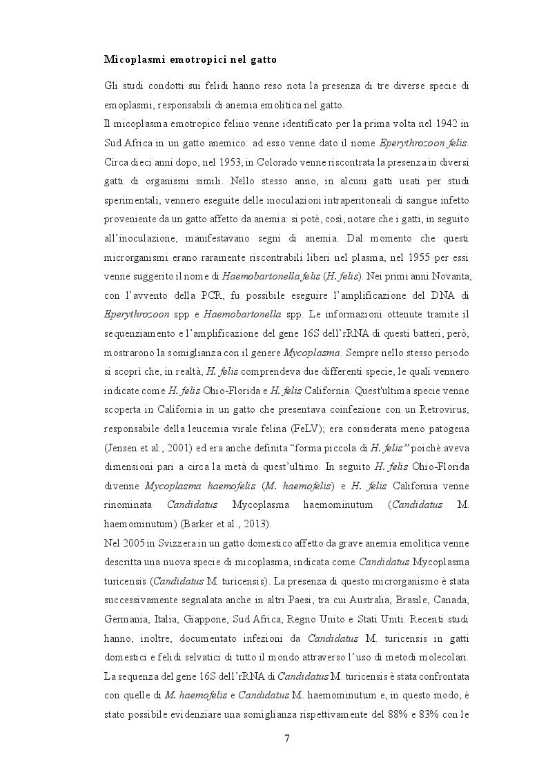 Anteprima della tesi: Anemia infettiva felina: quale ruolo per Candidatus Mycoplasma turicensis?, Pagina 6