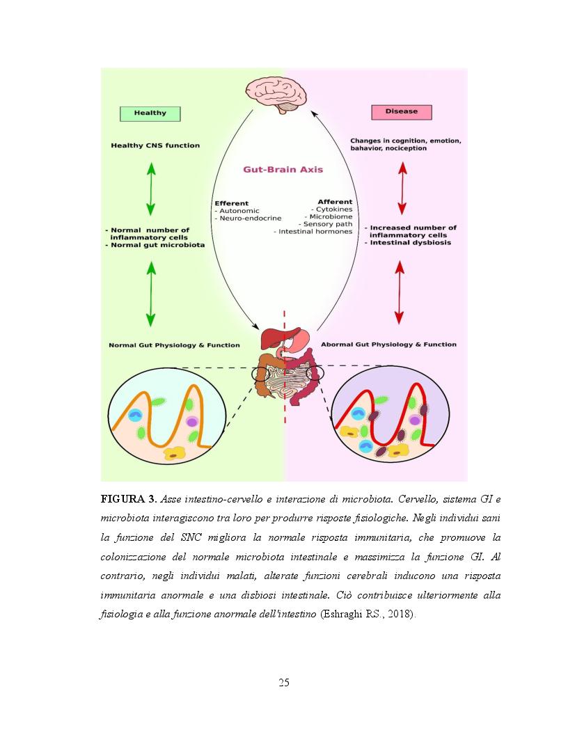 Anteprima della tesi: Il ruolo dell'attività fisica nel miglioramento delle abilità sociali nei soggetti autistici, Pagina 6