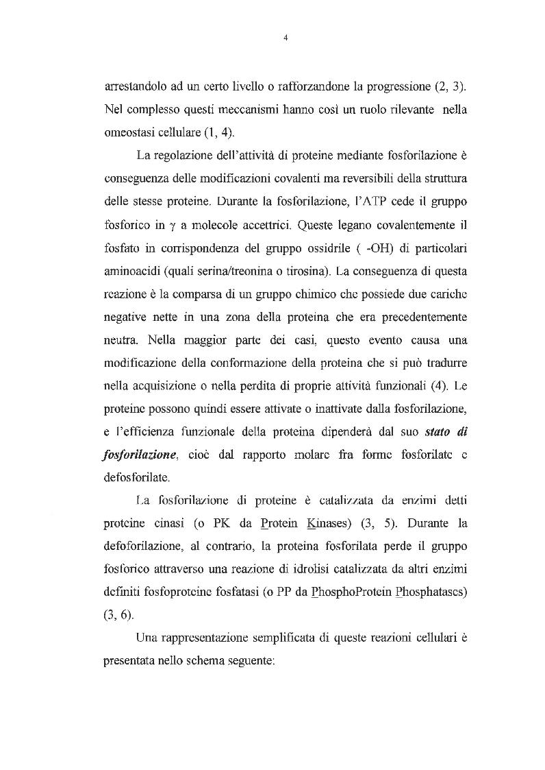 Anteprima della tesi: Effetto dei promotori di tumori su proteine cinasi attivate da mitogeni, Pagina 3