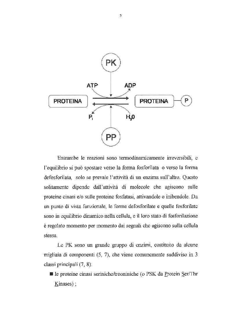 Anteprima della tesi: Effetto dei promotori di tumori su proteine cinasi attivate da mitogeni, Pagina 4