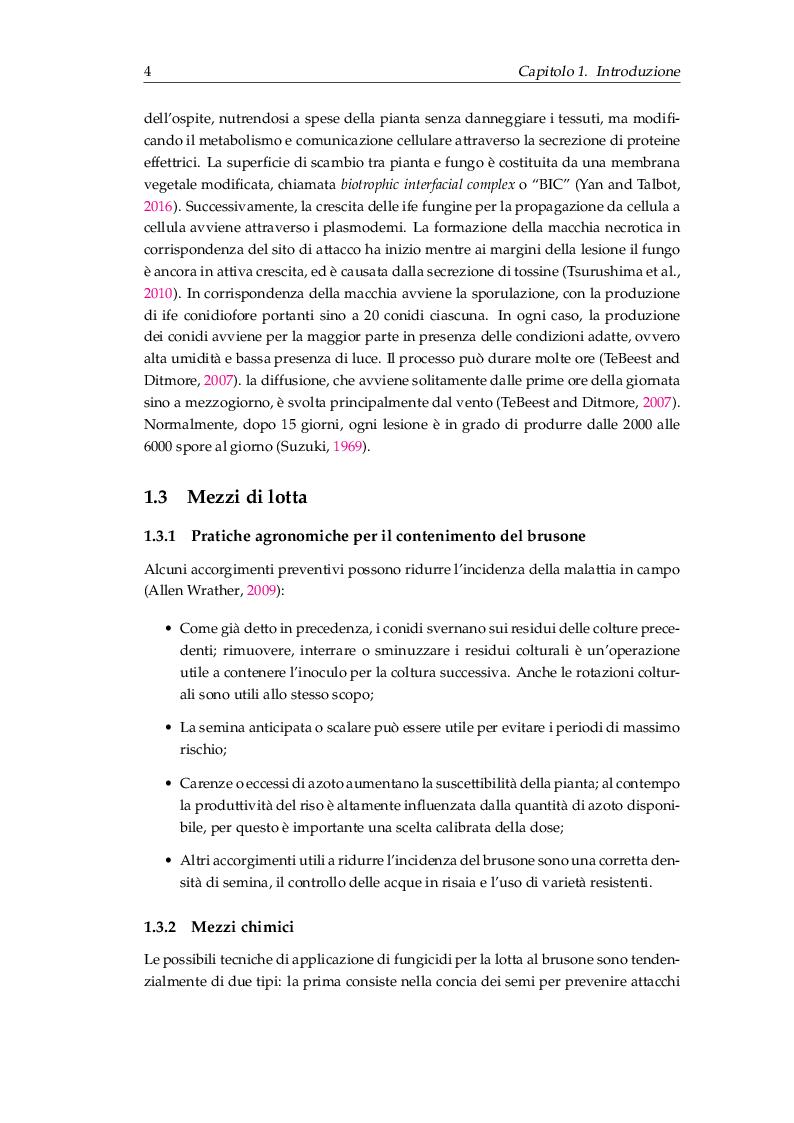 Anteprima della tesi: Procedure di inoculazione di Pyricularia oryzae su riso, Pagina 5