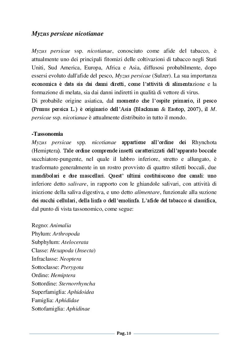 Anteprima della tesi: Analisi degli effetti della fertilizzazione azotata sulle infestazioni di Myzus persicae nicotiane (Blackman) su tabacco (Nicotiana tabacum L.), Pagina 5
