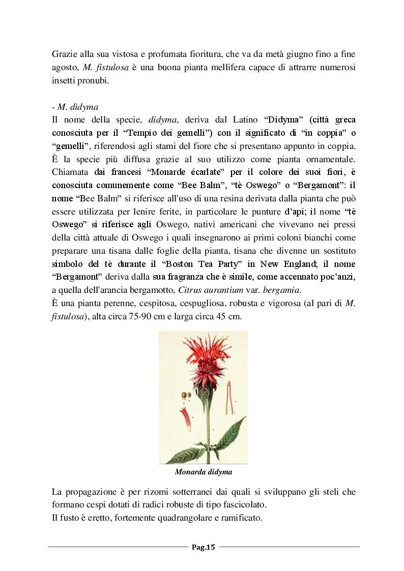 Anteprima della tesi: Monarda fistulosa e Monarda dydima: valutazione degli aspetti agronomico-colturali e dell'attività antimicrobica dell'olio essenziale, Pagina 6