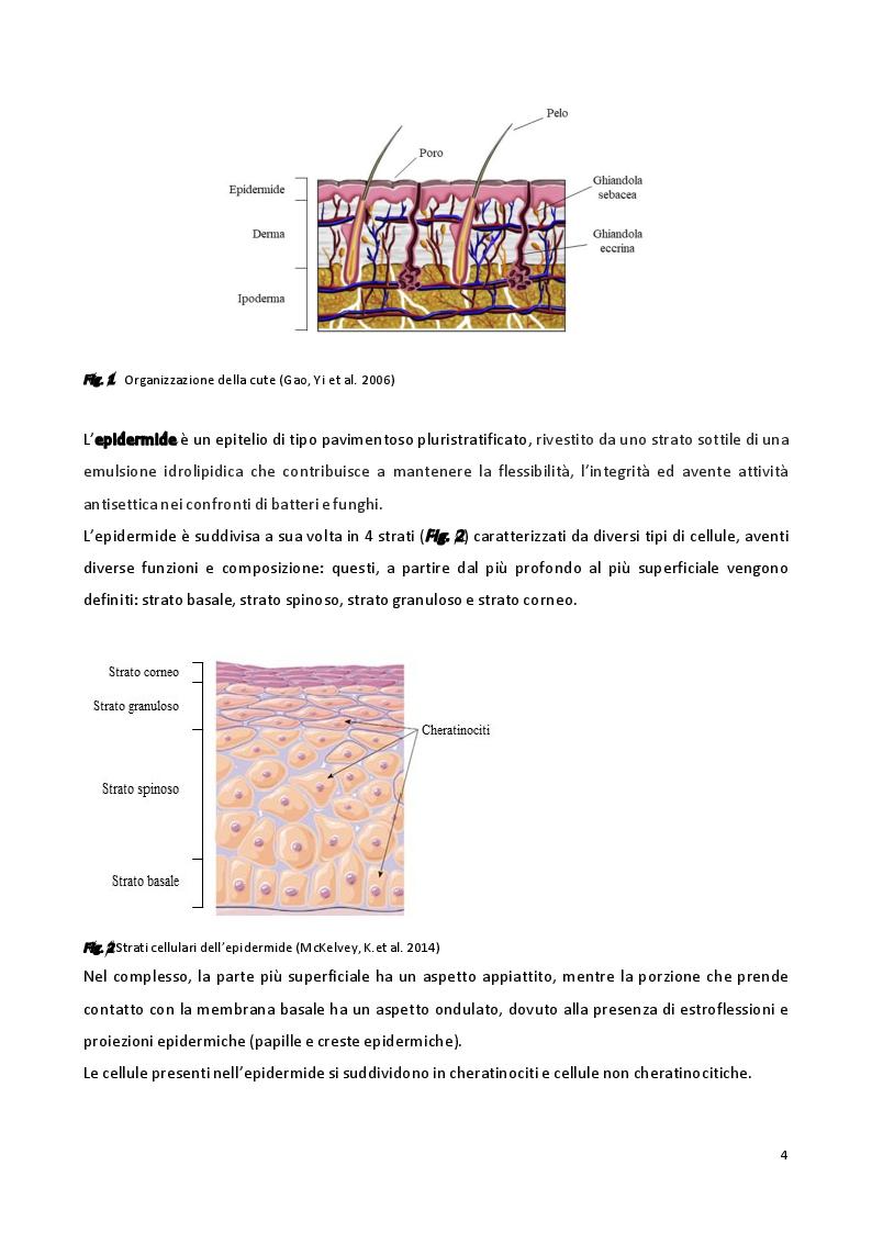 Anteprima della tesi: Sviluppo di formulazioni anti-ageing: focus su Argirelina (Acetil-esapeptide-8), Pagina 3