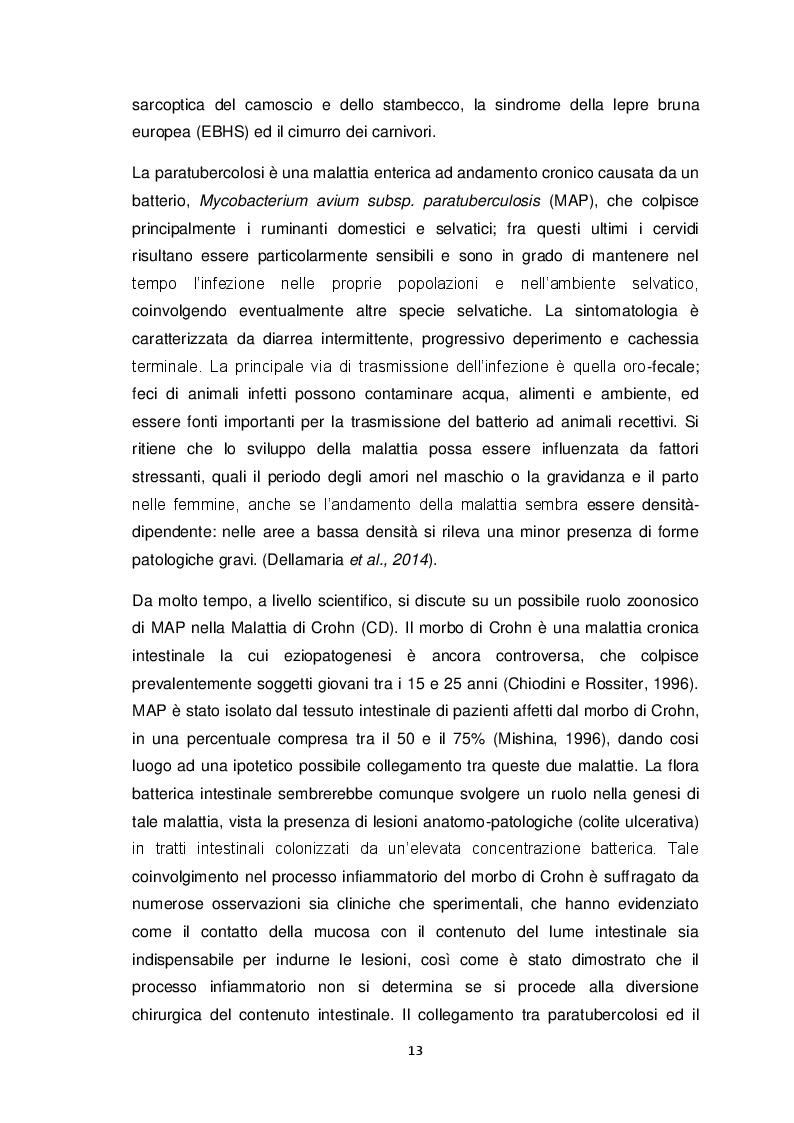 Estratto dalla tesi: Ricerca di MAP nella fauna selvatica (Cervus elaphus). Isolamento e genotipizzazione da campioni di campo