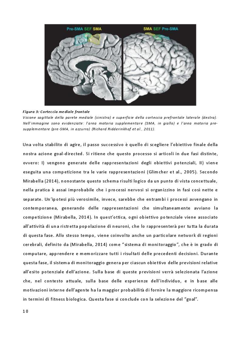 Estratto dalla tesi: L'importanza delle emozioni nella genesi delle azioni: uno studio di risonanza magnetica funzionale