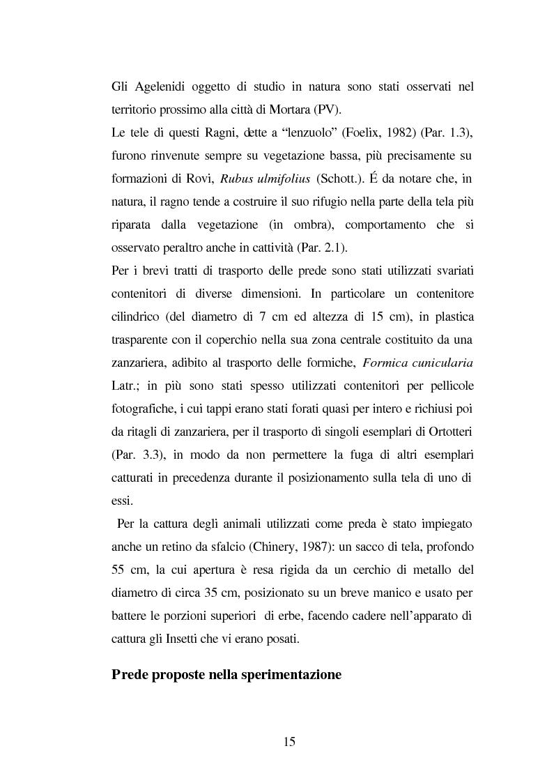 Anteprima della tesi: Predazione di Agelena Labyrinthica (Clerk) (Araneae, Agelenidae) in natura e laboratorio, con prede di tipologia differente, Pagina 13