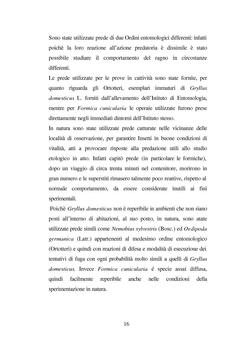 Anteprima della tesi: Predazione di Agelena Labyrinthica (Clerk) (Araneae, Agelenidae) in natura e laboratorio, con prede di tipologia differente, Pagina 14