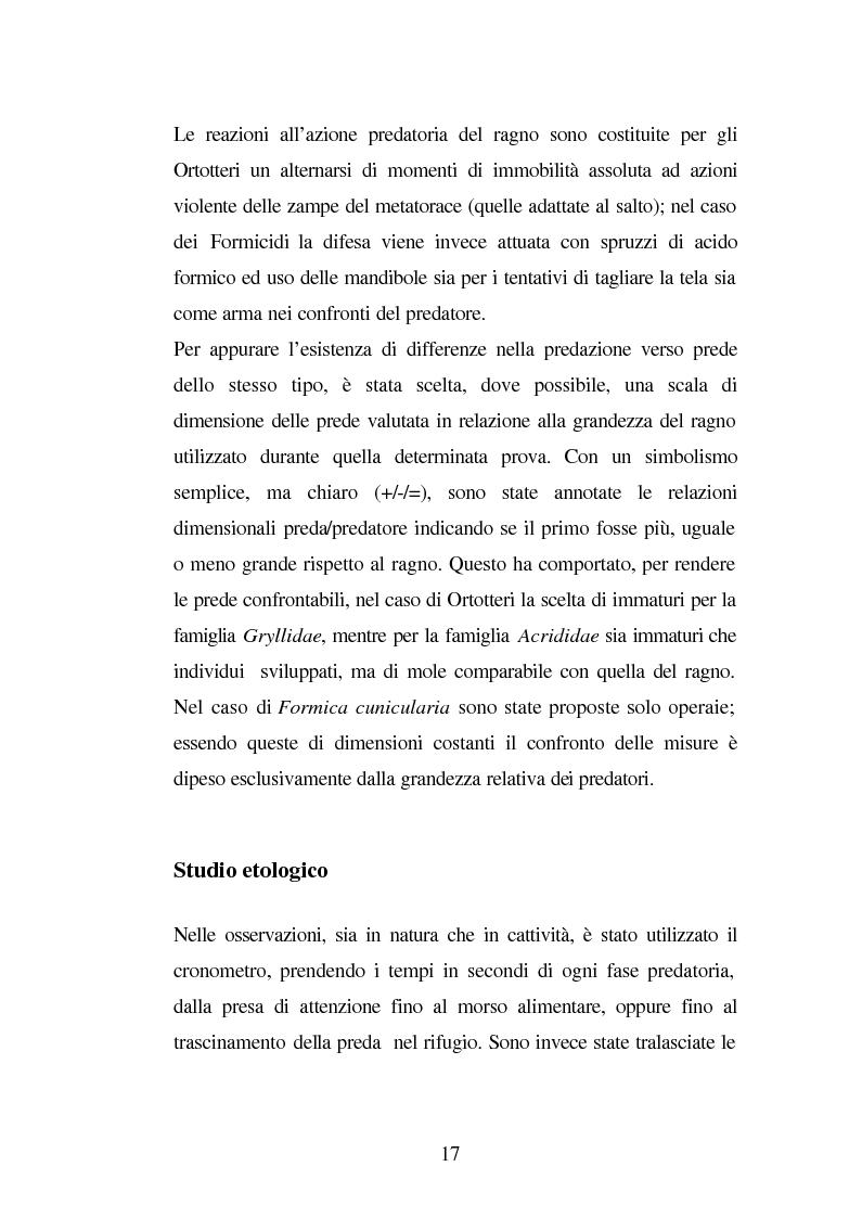 Anteprima della tesi: Predazione di Agelena Labyrinthica (Clerk) (Araneae, Agelenidae) in natura e laboratorio, con prede di tipologia differente, Pagina 15