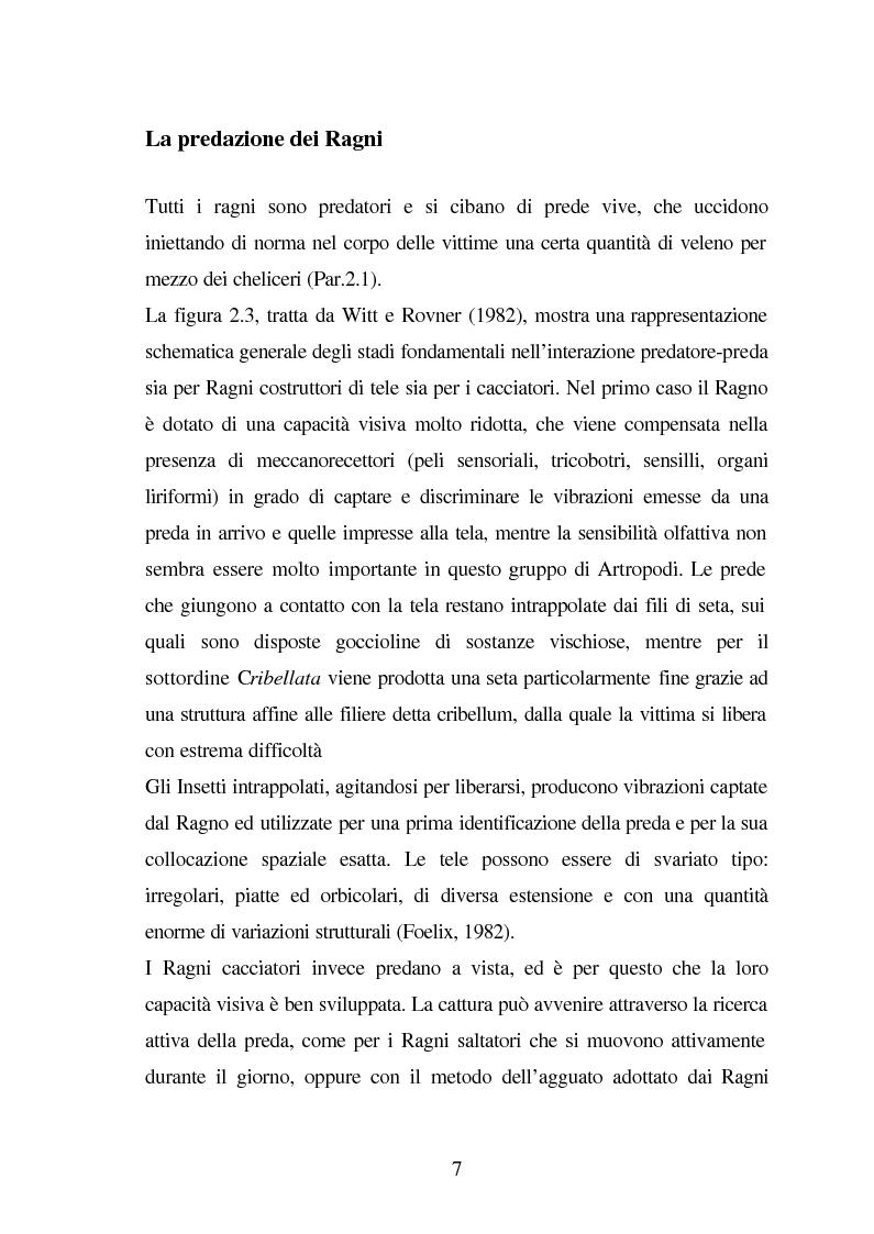 Anteprima della tesi: Predazione di Agelena Labyrinthica (Clerk) (Araneae, Agelenidae) in natura e laboratorio, con prede di tipologia differente, Pagina 5