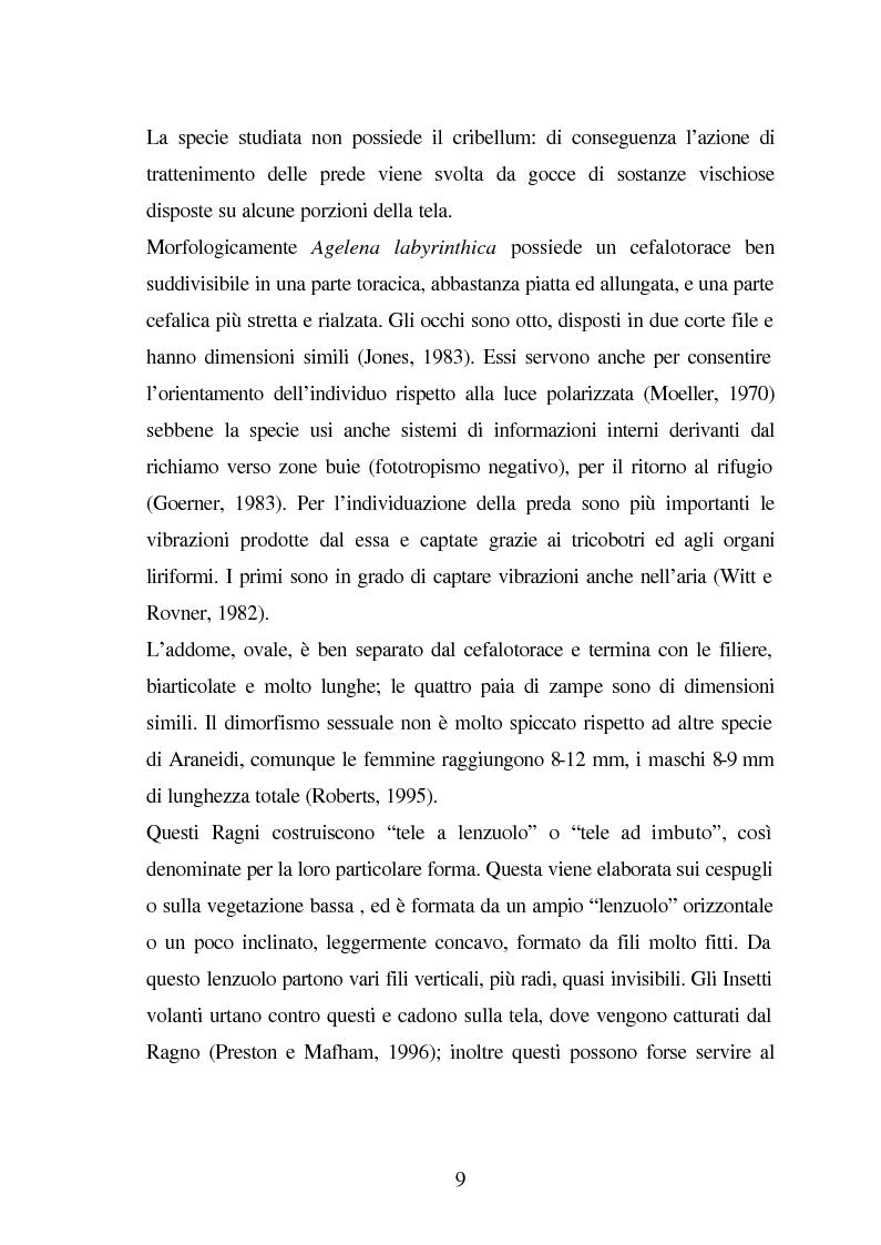 Anteprima della tesi: Predazione di Agelena Labyrinthica (Clerk) (Araneae, Agelenidae) in natura e laboratorio, con prede di tipologia differente, Pagina 7
