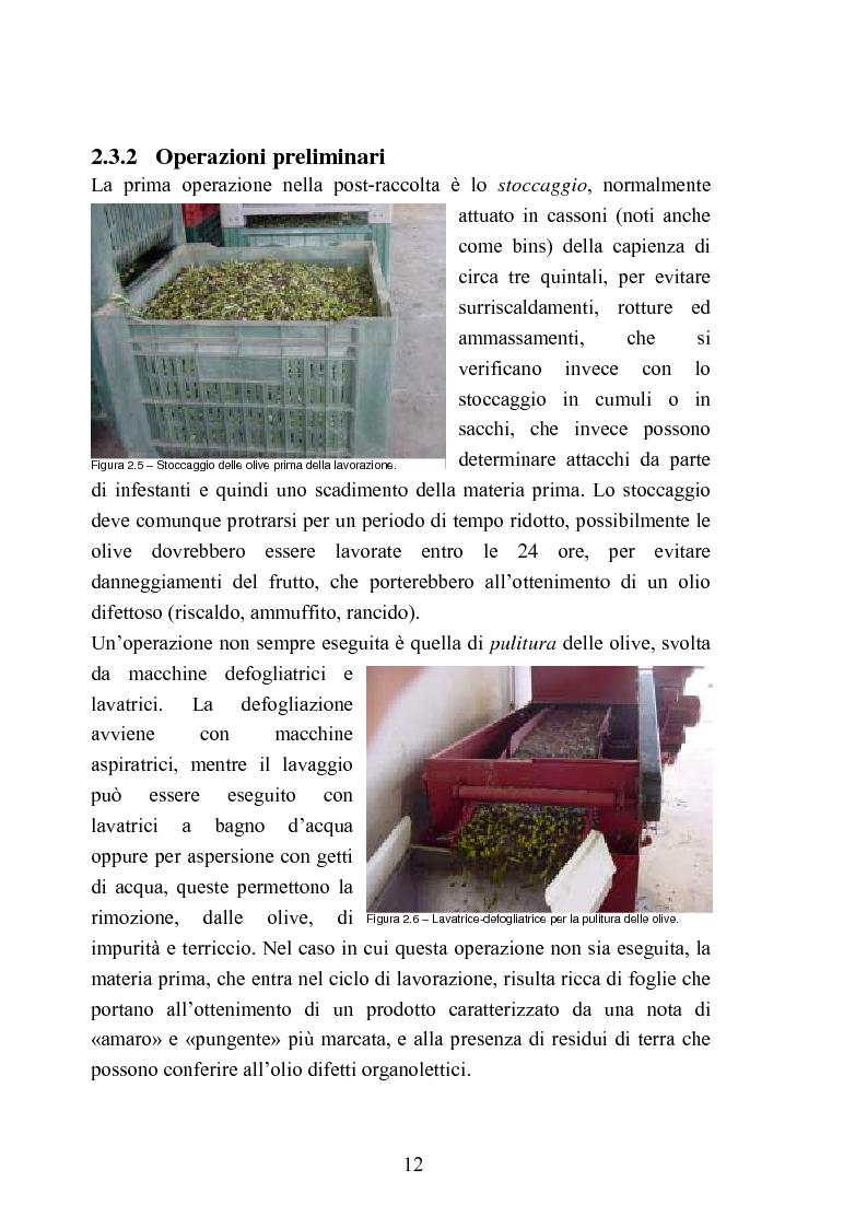 Anteprima della tesi: Valutazione della qualità di oli extravergini di oliva, ottenuti con diverse tecniche di estrazione, in relazione al contenuto di sotanze a struttura fenolica, Pagina 12