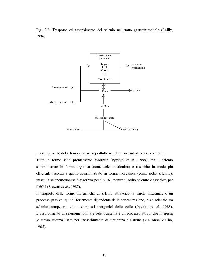 Anteprima della tesi: Accumulo di selenio da parte di specie di Lactobacillus, Pagina 15