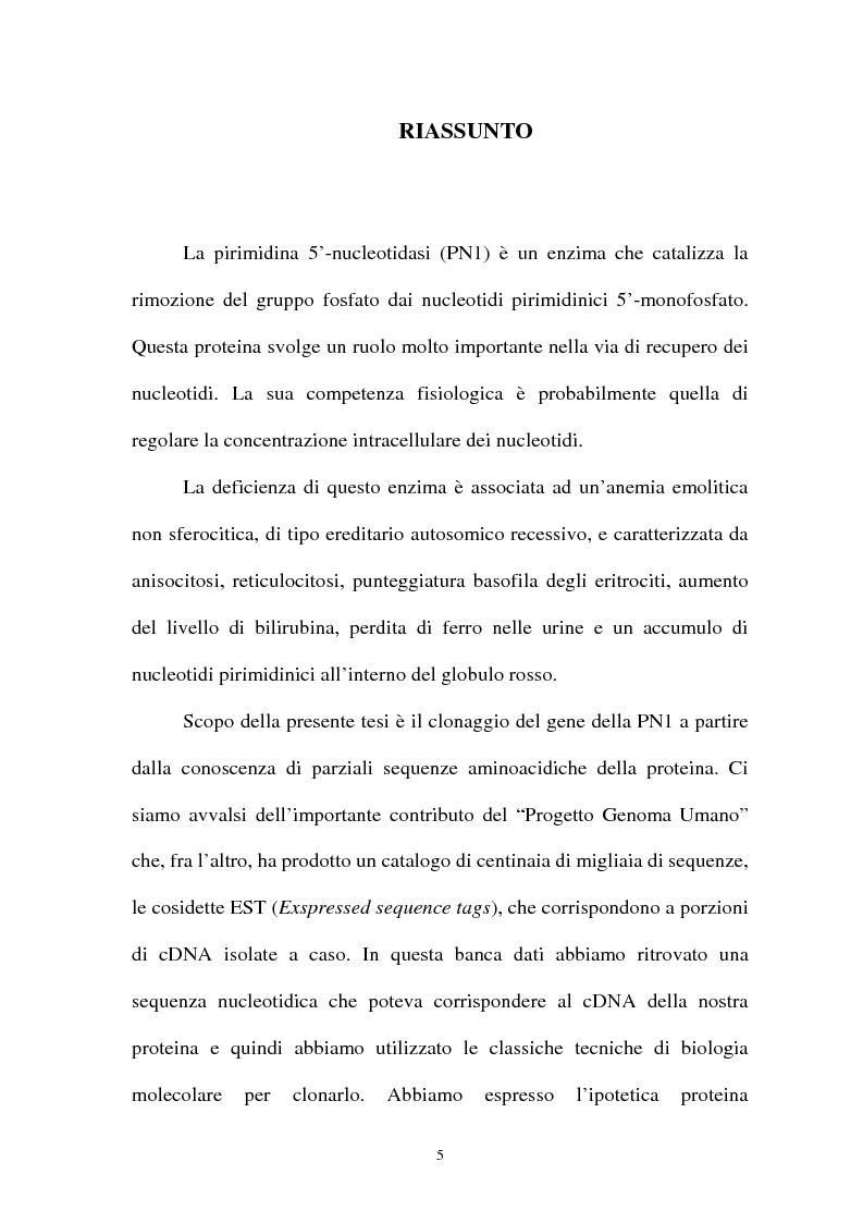 Anteprima della tesi: Pirimidina 5' nucleotidasi da eritrocita umano: clonaggio ed espressione del cdna, Pagina 1